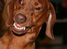"""Royal gravhund: """"Jeg handlede i affekt"""""""