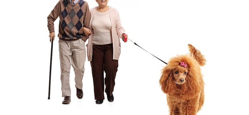To danskere og en hund får lettere skrammer i Japan; resten af landet vistnok også i problemer