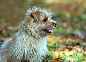 Reinkarnationslæren bevist af hund