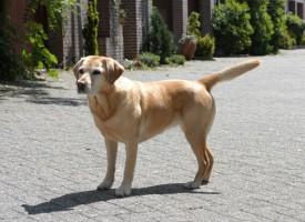 Kæledyrsbondegård afsløret som fup: familiehund blev i virkeligheden aflivet
