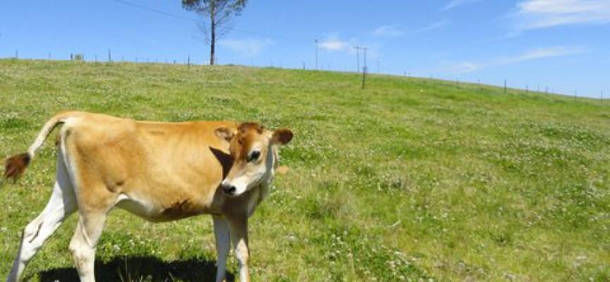 Statens Kunstfond overtager landbrugsstøtten
