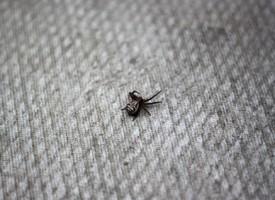 Kvinde lemlæstet af lillebitte edderkop