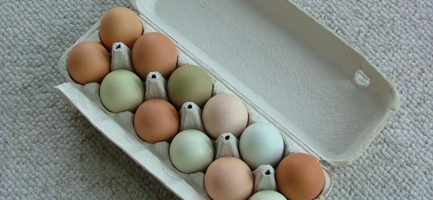 Endelig enighed på Syrien-konferencen: Vi dropper æg fra burhøns