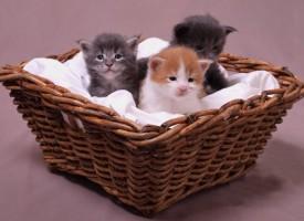 Webavis specialiseret i YouTube-klip med søde børn og katte er et kæmpehit