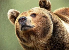 Bjørne enige: Sælg bare skindet først