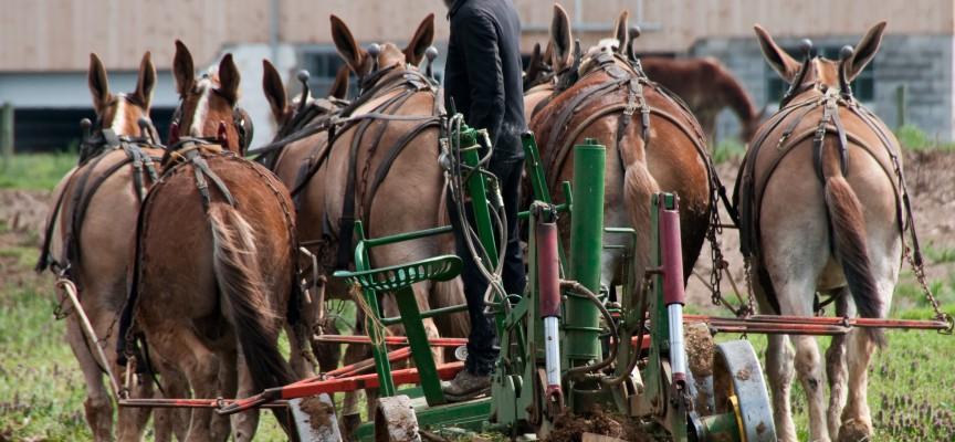 Amish-samfund viser Danmark vejen: Har ikke mistet en eneste arbejdsplads i 300 år