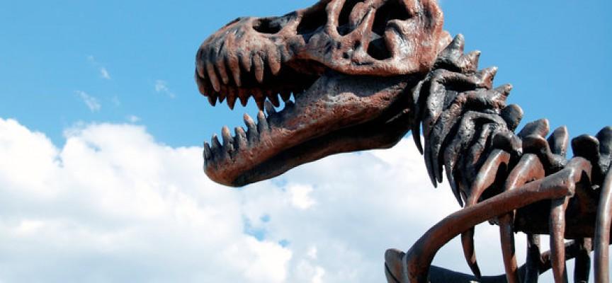 Ukendt dinosaurart fundet i bunden af kummefryser