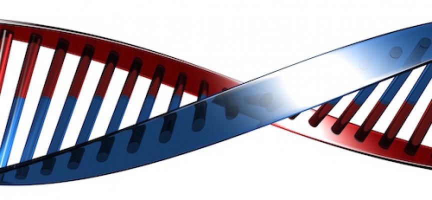 Genetikere fastslår: Kvinder skabt til bestyrelser