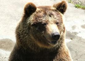 Bjørnen var ikke mere bange for Svend, end Svend var for bjørnen