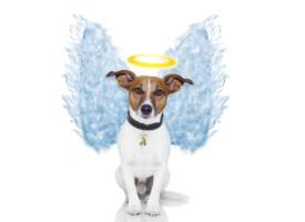Brevkasse: Må man tage hunden med sig ind i himlen?