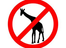 Ny Marius desværre ikke en giraf: Udvises uden internationale protester