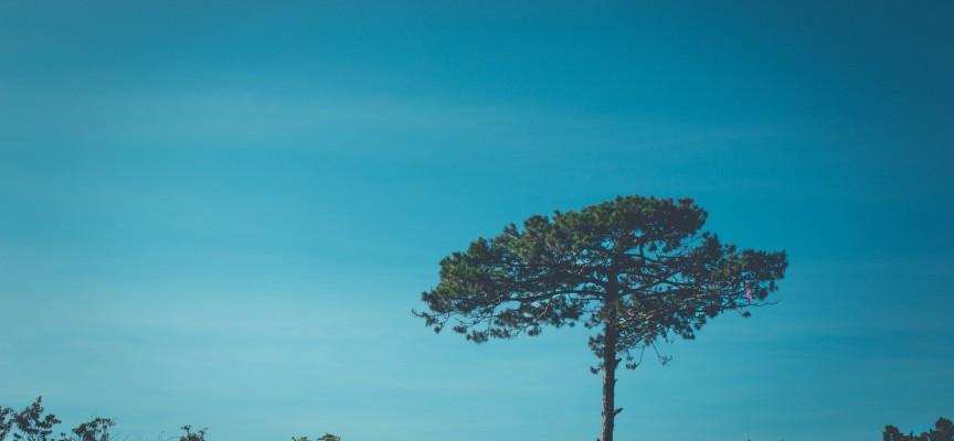 Anders Samuelsen vil slå Johanne Schmidt-Nielsens rekord i nedkravling fra højt træ