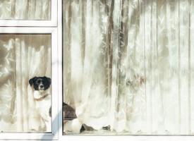 Brevkasse: Hunden i det vindue koster 2325,95