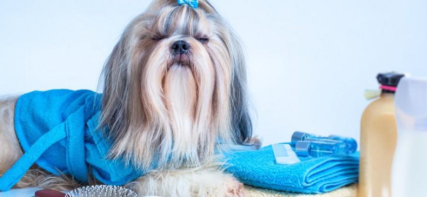 RokokoGuide: Vasker du håret forkert? Sådan må du aldrig gøre!