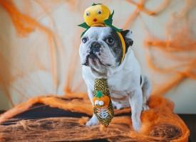 RokokoGuide: Sådan finder du den ideelle udklædning til Halloween-festen