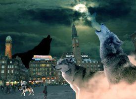 Jyske borgmestre kræver ulve på Rådhuspladsen