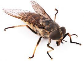 Flue vinder nervekrig over ægtepar fra Herning