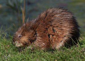Regeringen tilbyder repatrieringsbeløb til invasive arter