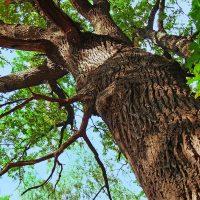 Træ voksede ind i himlen