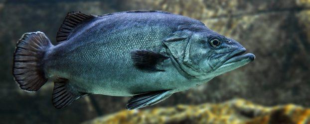 Horoskop: Fisken kan godt glemme alt om det halvmaraton