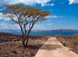 Kenyansk flyselskab i ny reklame: Alting kommer fra Afrika