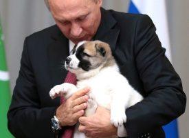 Putin vil ændre forfatningen, så hans hund kan blive præsident