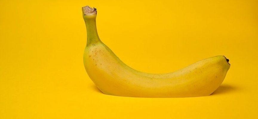 Frokostpause begyndte præcis på det tidspunkt, hvor Heidis banan var perfekt moden