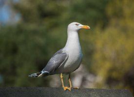Regeringsappel til landets fugle: Sprit af og hold afstand!