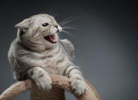 Kvinde gjorde kat fortræd